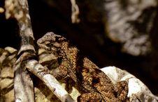 Free Scaled Reptile, Lizard, Fauna, Reptile Royalty Free Stock Photos - 112491298