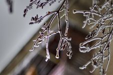 Free Branch, Twig, Winter, Macro Photography Stock Photography - 112491512