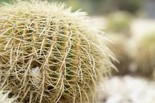 Free Cactus, Plant, Thorns Spines And Prickles, Flowering Plant Royalty Free Stock Image - 112495366