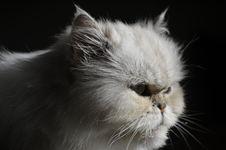 Free Cat, Whiskers, Small To Medium Sized Cats, Cat Like Mammal Stock Photo - 112496040