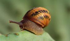 Free Snails And Slugs, Snail, Molluscs, Invertebrate Royalty Free Stock Photography - 112497267