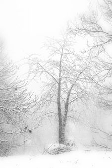 Free Tree, Black And White, Branch, Winter Stock Photo - 112567770