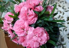Free Flower, Plant, Pink, Flowering Plant Royalty Free Stock Photos - 112567918