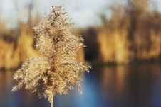 Free Branch, Frost, Winter, Morning Stock Photo - 112568650