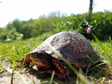 Free Emydidae, Turtle, Tortoise, Reptile Stock Images - 112569014