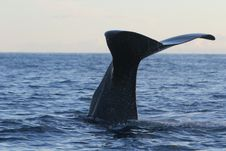 Free Mammal, Marine Mammal, Whales Dolphins And Porpoises, Whale Stock Photos - 112569223