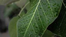 Free Leaf, Plant Pathology, Plant, Spring Greens Royalty Free Stock Photography - 112569367