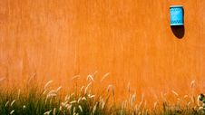Free Grass, Grass Family, Field, Orange Stock Images - 112570704