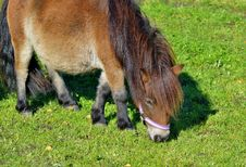 Free Horse, Grazing, Grass, Pasture Royalty Free Stock Photography - 112570937