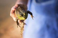 Free Fauna, Reptile, Lizard, Scaled Reptile Stock Image - 112571101