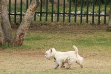 Free Dog Like Mammal, Dog, Dog Breed, Grass Royalty Free Stock Image - 112571186
