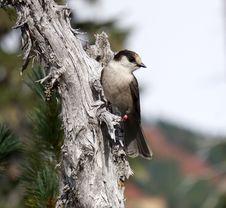 Free Bird, Fauna, Beak, Tree Stock Image - 112571321