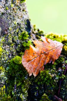 Free Leaf, Autumn, Plant, Maple Leaf Royalty Free Stock Photos - 112572338