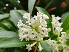 Free Flower, Plant, Flora, Herbaceous Plant Stock Photos - 112572623