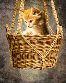 Free Cat, Small To Medium Sized Cats, Whiskers, Basket Royalty Free Stock Photography - 112573777