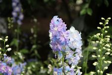 Free Flower, Flowering Plant, Plant, Delphinium Stock Photography - 112589822