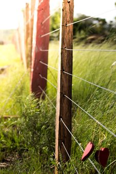 Free Grass, Fence, Leaf, Plant Royalty Free Stock Photography - 112591487