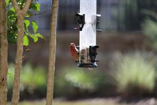 Free Bird Feeder, Fauna, Bird, Branch Stock Image - 112591601