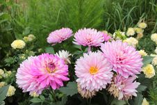 Free Flower, Plant, Flowering Plant, Aster Royalty Free Stock Photos - 112592168