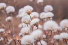 Free Flower, Spring, Flora, Winter Stock Photos - 112593173
