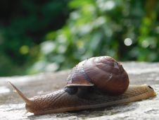 Free Snails And Slugs, Snail, Molluscs, Slug Stock Image - 112593211
