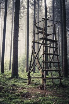 Free Forest, Tree, Woodland, Ecosystem Stock Photos - 112593843