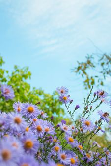 Free Flower, Aster, Sky, Flowering Plant Royalty Free Stock Images - 112593899