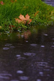 Free Water, Reflection, Leaf, Pond Royalty Free Stock Photo - 112593955