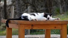 Free Cat, Small To Medium Sized Cats, Fauna, Cat Like Mammal Stock Photos - 112594493