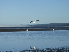 Free Waterway, Water, Sea, Bird Royalty Free Stock Images - 112594789