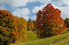 Free Nature, Autumn, Temperate Broadleaf And Mixed Forest, Ecosystem Stock Photos - 112594943