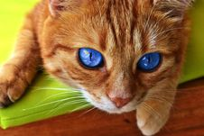 Free Cat, Whiskers, Small To Medium Sized Cats, Nose Royalty Free Stock Photography - 112595427