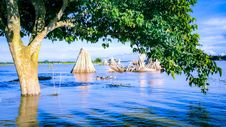 Free Green And Brown Tree On Body Of Water Royalty Free Stock Photography - 112669427