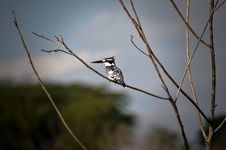 Free White And Black Bird On Brown Tree Stem Royalty Free Stock Photo - 112669555