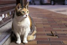 Free Brown And White Tabby Cat Sitting On Brown Brick Pathway Stock Images - 112669794