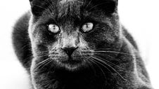 Free Cat, Black Cat, Whiskers, Black Royalty Free Stock Image - 112678046