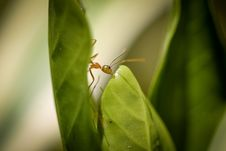 Free Insect, Leaf, Macro Photography, Pest Stock Photos - 112678373