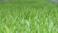 Free Grass, Grass Family, Field, Wheatgrass Royalty Free Stock Photos - 112678378