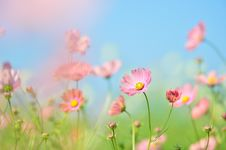 Free Flower, Wildflower, Pink, Sky Royalty Free Stock Images - 112678469