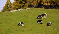Free Grassland, Pasture, Grazing, Herd Royalty Free Stock Image - 112678716