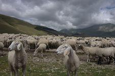 Free Herd, Sheep, Pasture, Grazing Royalty Free Stock Photos - 112678798