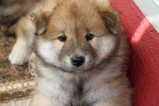 Free Dog, Dog Like Mammal, Dog Breed, Mammal Royalty Free Stock Image - 112678806