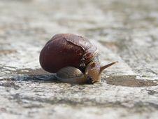 Free Snails And Slugs, Snail, Molluscs, Slug Stock Photos - 112678823