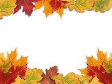 Free Mixed-Leaf Frame Royalty Free Stock Image - 11270136