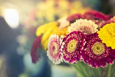 Free Red Petaled Flower Close-up Photography Royalty Free Stock Image - 112738626