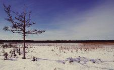 Free Tree On Desert Stock Photography - 112738692