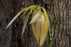 Free Leaf, Plant, Flora, Plant Stem Stock Image - 112839981