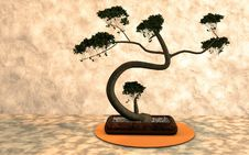 Free Plant, Tree, Bonsai, Houseplant Stock Photo - 112840080
