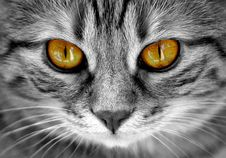 Free Cat, Whiskers, Face, Black And White Royalty Free Stock Photography - 112840167