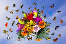 Free Flower, Butterfly, Moths And Butterflies, Insect Stock Photos - 112840513